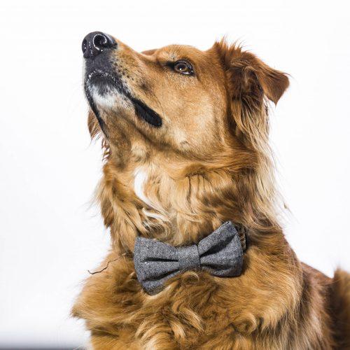 Black Linen Dog Bow